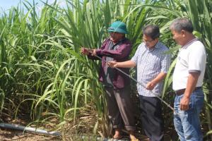 Phú Yên: Giải hạn cho cây mía bằng phương pháp tưới nhỏ giọt
