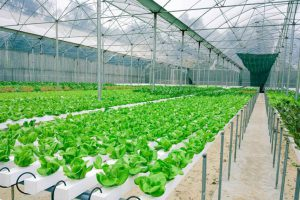 Công nghệ nhà màng – lựa chọn cho mô hình nông nghiệp hiện đại