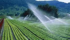 Mô hình tưới tiết kiệm nước cho cây trồng