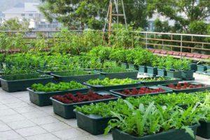 Hướng dẫn cách tưới nước cho rau tự trồng tại nhà
