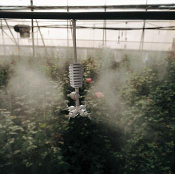 vòi phun sương coolnet